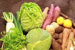 高騰していた野菜の価格に値下がりのきざし! 9月上旬...