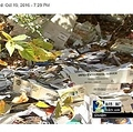 米ジョージア州の大量の未配達郵便物が投棄されていた現場(出典:http://www.wsbtv.com)