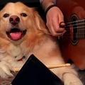 ドラムスティックを握り、ギターに合わせてリズムを取る犬の動画