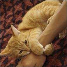 うちの猫タンってば、私に欲情しているんです!!!