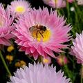 蜂に刺される悲劇を回避する方法5