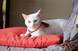 こんな美白猫が2匹そろうだと……!  - (C)2015「続・猫侍」製作委員会