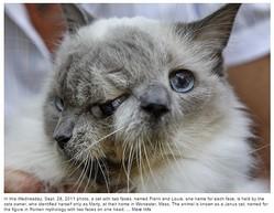 """「顔面重複奇形」猫の""""フランク&ルイ""""15歳で天国へ(画像はwpxi.comのスクリーンショット)"""