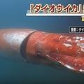 ダイオウイカが富山湾で発見される 鮮明な映像に世界が驚き