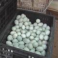 台湾で食用卵から基準値超えのダイオキシン検出 6242キロが販売停止