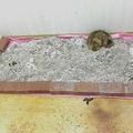 荒れた店内に猫が放置されていた(写真は清掃後、「犬猫と共生できる社会をめざす会」提供)