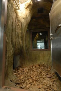 「クー」が冬眠する予定の冬眠ブース。(提供:上野動物園)
