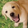 (C) 2010「きな子〜見習い警察犬の物語〜」製作委員会