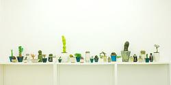 六本木に「YOSOOU」初のギャラリー&ショップ ″いい顔してる″植物を展示