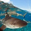 サメを何度も殴った21歳の男 禁止種を捕獲しようとした罪で逮捕