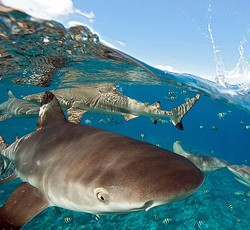 サメを何度も殴った若者逮捕