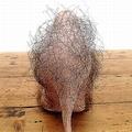 人毛が生えた不気味ハイヒールが話題に デザインの意図は