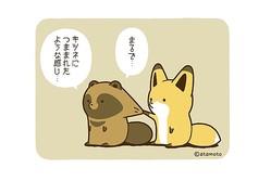 フォロー数16万人突破「タヌキとキツネ」のゆるい日常を描いたマンガがTwitterで大人気!