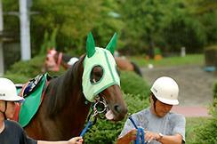 競走馬ホリエモン、今回の勝ち星で負け癖を解消できるか!? (画像は前走8戦目のパドックにて撮影)