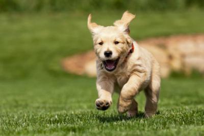 愛犬が最も喜ぶ正しい褒め方を伝授 優しくなでてあげることが大切と