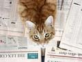 株取引で実験、猫に負けたプロ