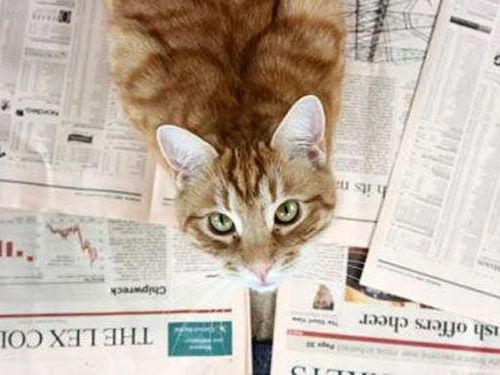 株取引で「プロ」「学生」「猫」が勝負、誰が1番儲けたか?イギリスで実験