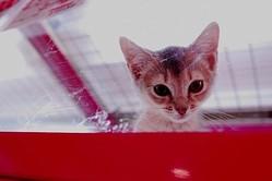 """ペット系図netが『2014年 ペットの名前トレンド』発表!2位は""""マロン""""1位は?"""