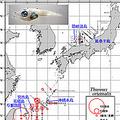 クロマグロ、日本漁獲量かわらず