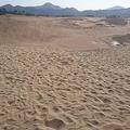 鳥取砂丘の「オアシス」が巨大化 例年にない大きさに