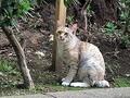 野良猫が野鳥を襲う?(写真は、イメージ)