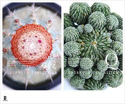 ビームスのギャラリーで「いい顔してる植物」展覧会 アーティストコラボT販売も