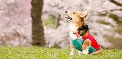 Doctors Me(ドクターズミー)- 正しい知識で、愛犬をフィラリアから守ろう!