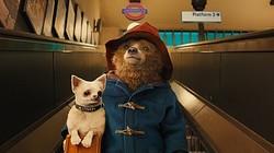 これが実写版『パディントン』だ!  - (c) 2014 STUDIOCANAL S.A.  TF1 FILMS PRODUCTION S.A.S Paddington Bear TM, Paddington TM AND PB TM are trademarks of Paddington and Company Limited