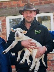 6本脚の子羊。画像は英紙『デイリー・ミラー』電子版のスクリーンショット