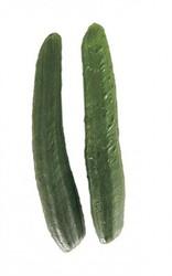 夏野菜の代表の一つ・きゅうり。生でも加熱してもおいしく、和洋中どんな料理にも合う!