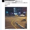熊本地震直後に「近くの動物園からライオン放たれたんだが」 デマツイートした男性逮捕