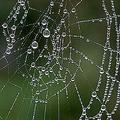 実験でクモから地球上最強の繊維が誕生 夢の装置に活用される可能性も