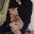 猫に嫌われてしまう人の特徴とは?「あまり家にいない」「構いすぎる」