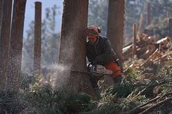 3月3日12:50上映。『林こずえの葉』は、新米林業作業員・林こずえを通して、近代林業の現状を映し出す。『祖谷物語-おくのひと-』の蔦哲一朗監督が、三たび地元・徳島にカメラを向けた。