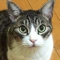 猫の飼い方をめぐる条例が賛否呼ぶ