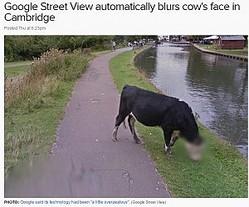 """Googleストリートビュー「頑張りすぎて」""""牛の顔""""にモザイクを入れる(http://www.abc.net.au)"""