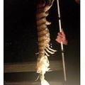 """フロリダ州で""""巨大シャコ""""を捕獲(画像はpeople.comのスクリーンショット)"""
