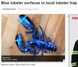 米メイン州で青いロブスターを捕獲(画像はwcsh6.comのスクリーンショット)