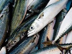魚の鮮度がわかるスマホも可能に?これからは魚の鮮度はレーザーで測る人が増えるかも