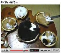 衝撃のネコ鍋