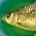 体半分失うも6か月生きた魚(画像はrt.comのスクリーンショット)