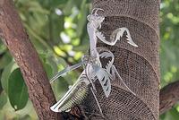 木の幹にとまって羽を広げる、メタルカマキリ