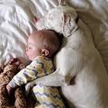 寝るまでそばにいるよ♡人間の赤ちゃんを寝かしつけるワンコがかわいすぎる!