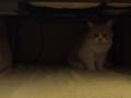 「怒ってなどいない!! 」怒り顔の猫・小雪 フォトコラム Day 49