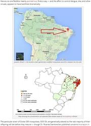 ジカ熱蔓延は遺伝子組み換え蚊が原因か?(http://theantimedia.org)