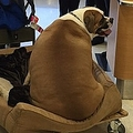 「VIP」扱いの太りすぎたイヌ ファーストクラス搭乗口で目撃される