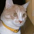 見ちゃダメ! トイレ中の猫と視線を合わせてはいけない理由