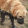 うちの犬は水に飛び込むと思った01