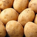 芽を取らなくてもよくなる?理研が「毒のないジャガイモ」を開発