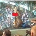 グラビアモデル、AFLファイナル戦を全裸で応援(画像はmirror.co.ukのスクリーンショット)